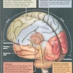 brain-meditating